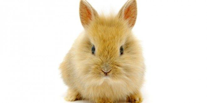 Водещ уби заек в ефир