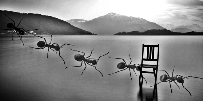 Когато мравките тръгнали наобратно
