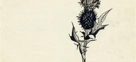 Силвия Плат: Светлината на ума