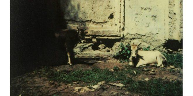 Andrei Tarkovsky 1979-84 (9)