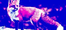 Димитър Воев: Под крилото на лисицата
