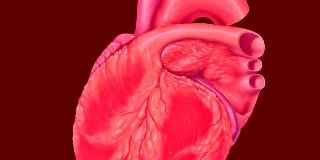 Сърце I и II